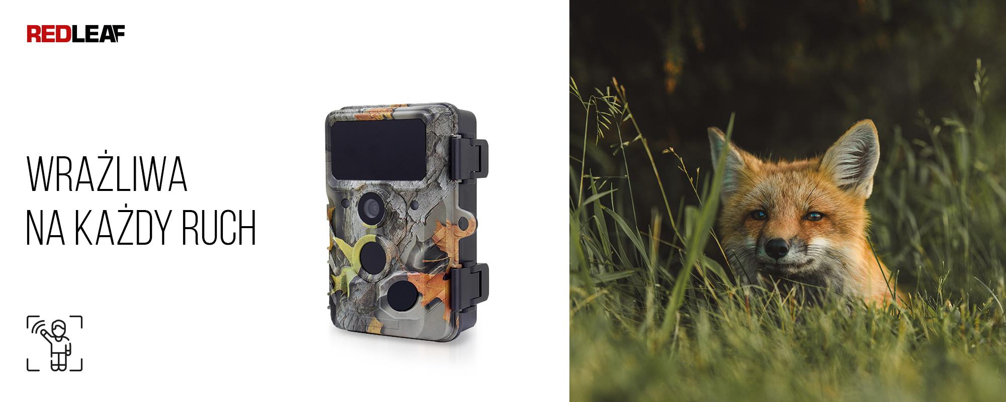 Kamera obserwacyjna Redleaf RD3019 oraz lis w trawie