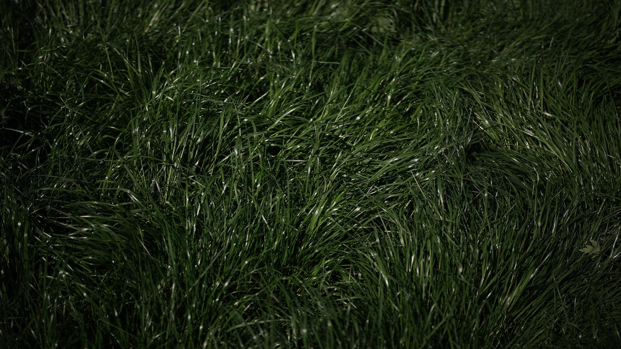 Sample Photos - Voigtlander APO Lanthar 50 mm f/2.0 lens for Leica M
