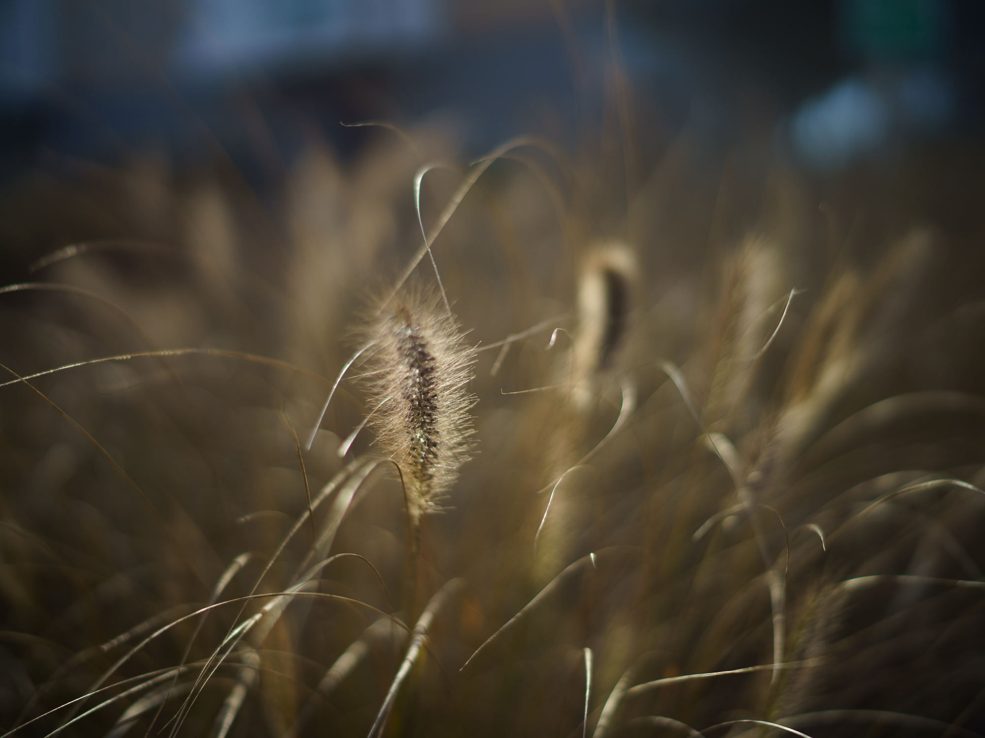 Sample Photos - Voigtlander Nokton II 50 mm f/1.5 lens for Leica M